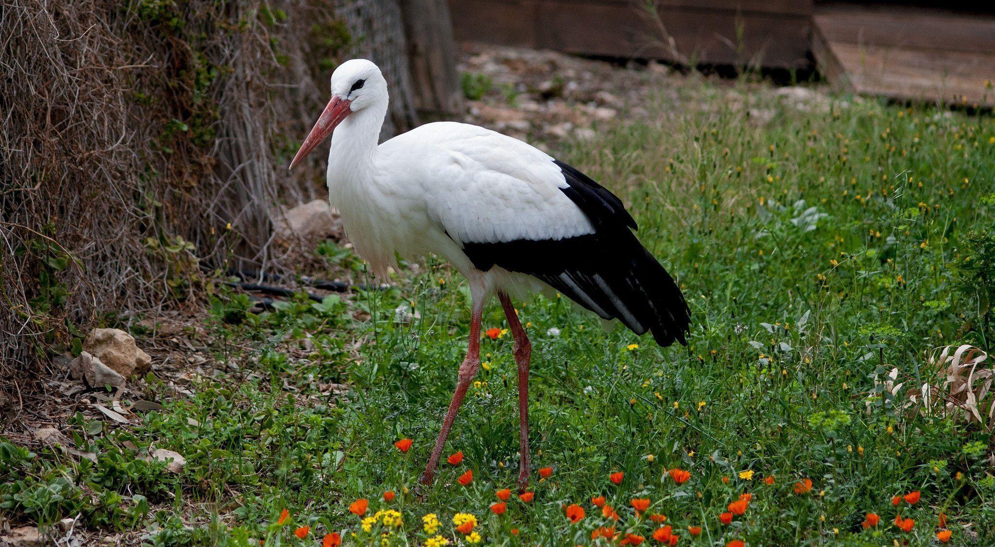 Stork Background