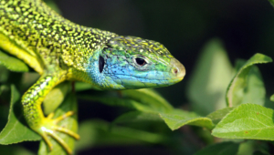 Lizard Photos