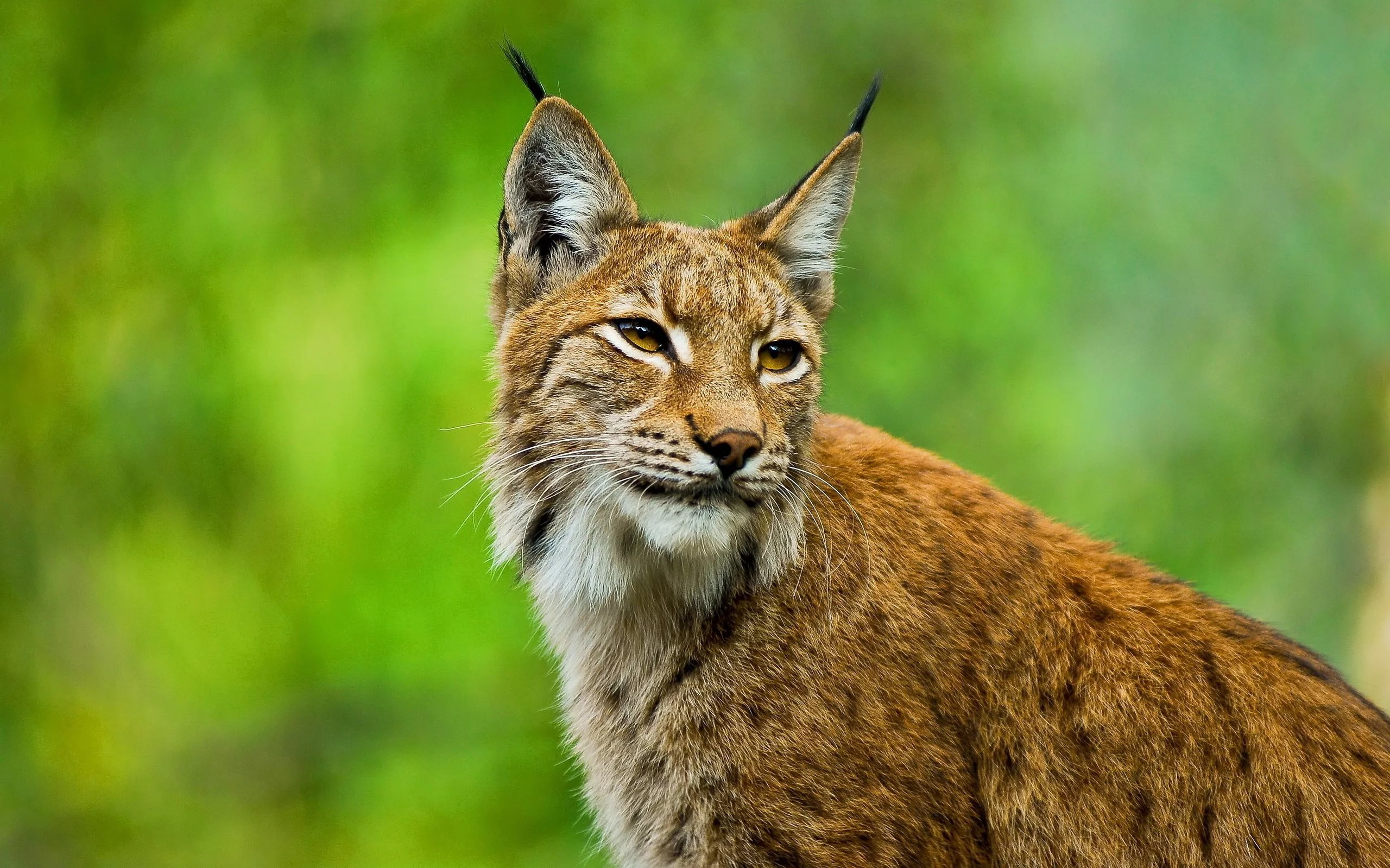 Lynx Pictures