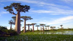Baobab 4K