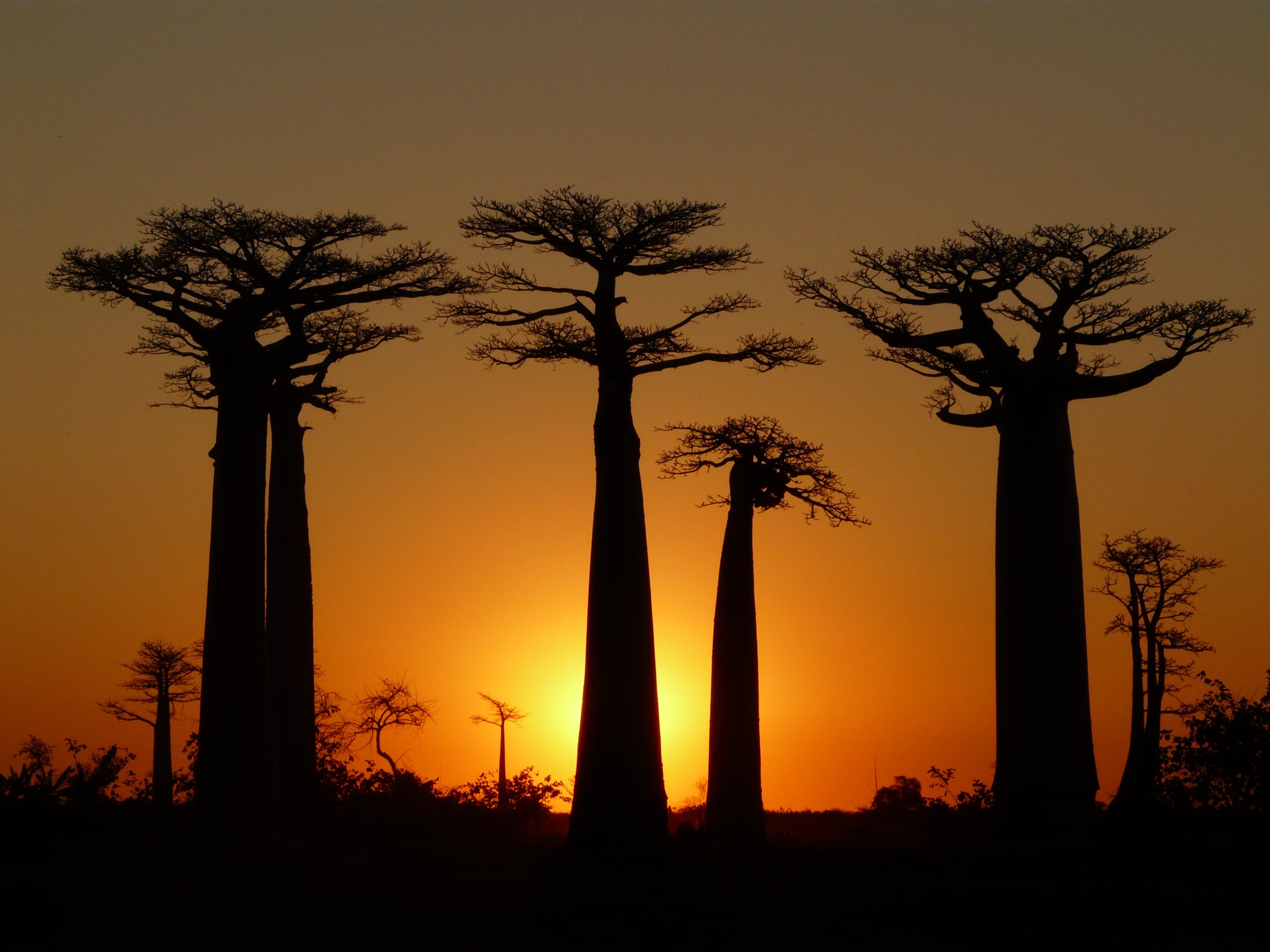 Baobab Desktop