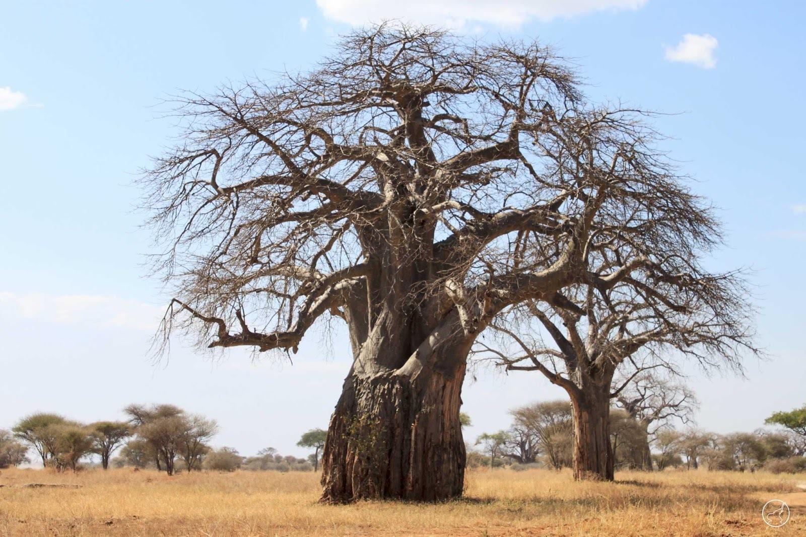 Baobab HD Desktop