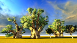 Baobab HD Wallpaper