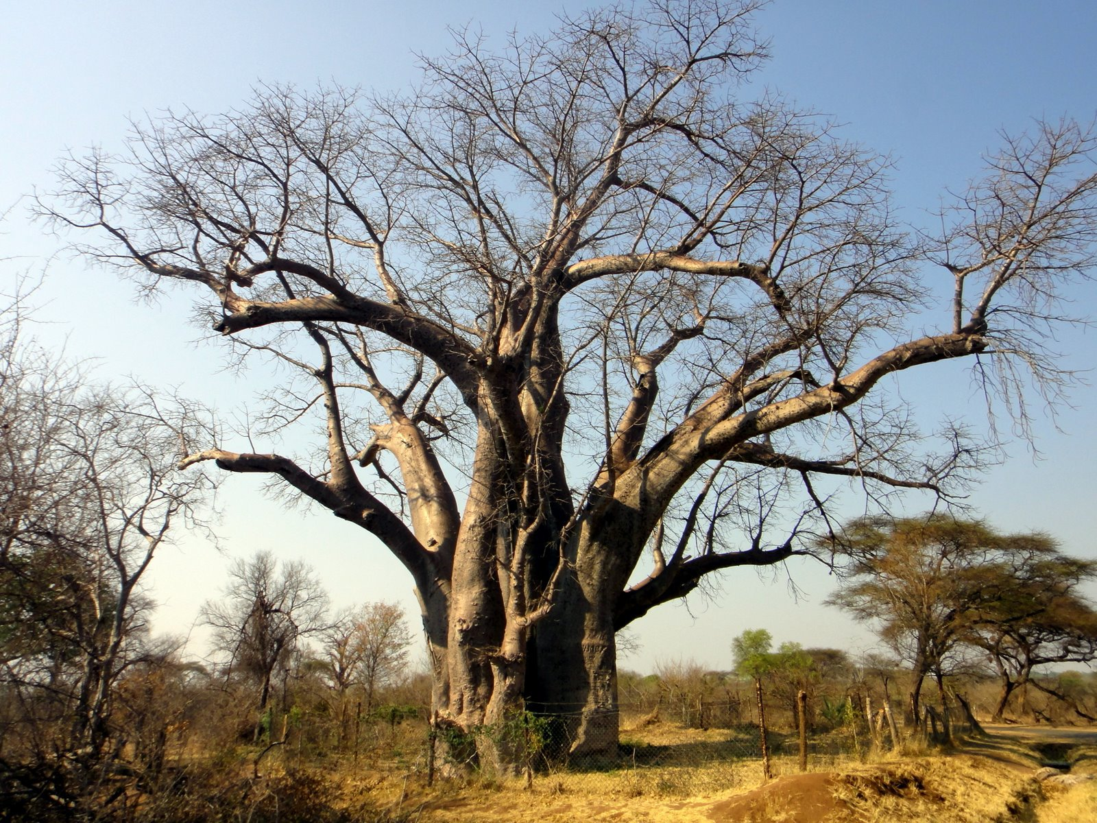 Baobab High Definition Wallpapers