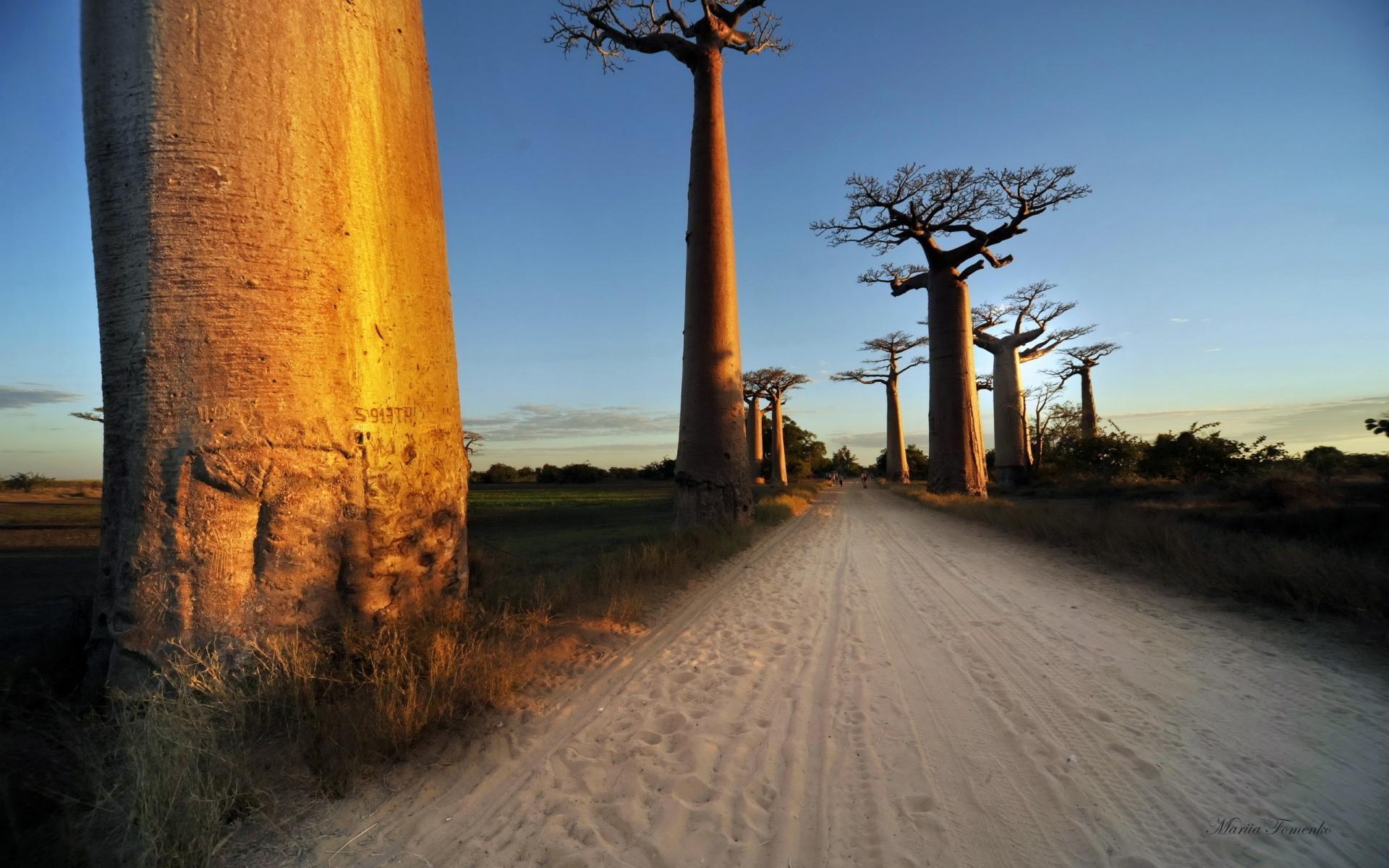 Baobab Photos