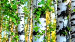 Birch HD