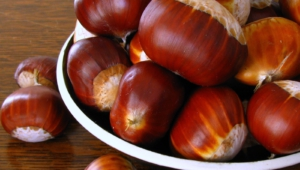 Chestnut HD Background