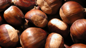 Chestnut High Definition Wallpapers