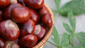 Chestnut Images