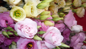 Lisianthus Pictures