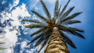 Palm Desktop Images