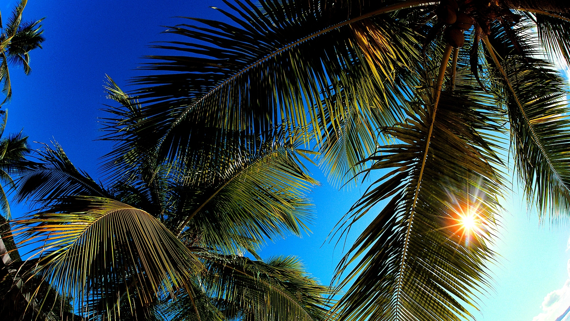 Palm Desktop Wallpaper