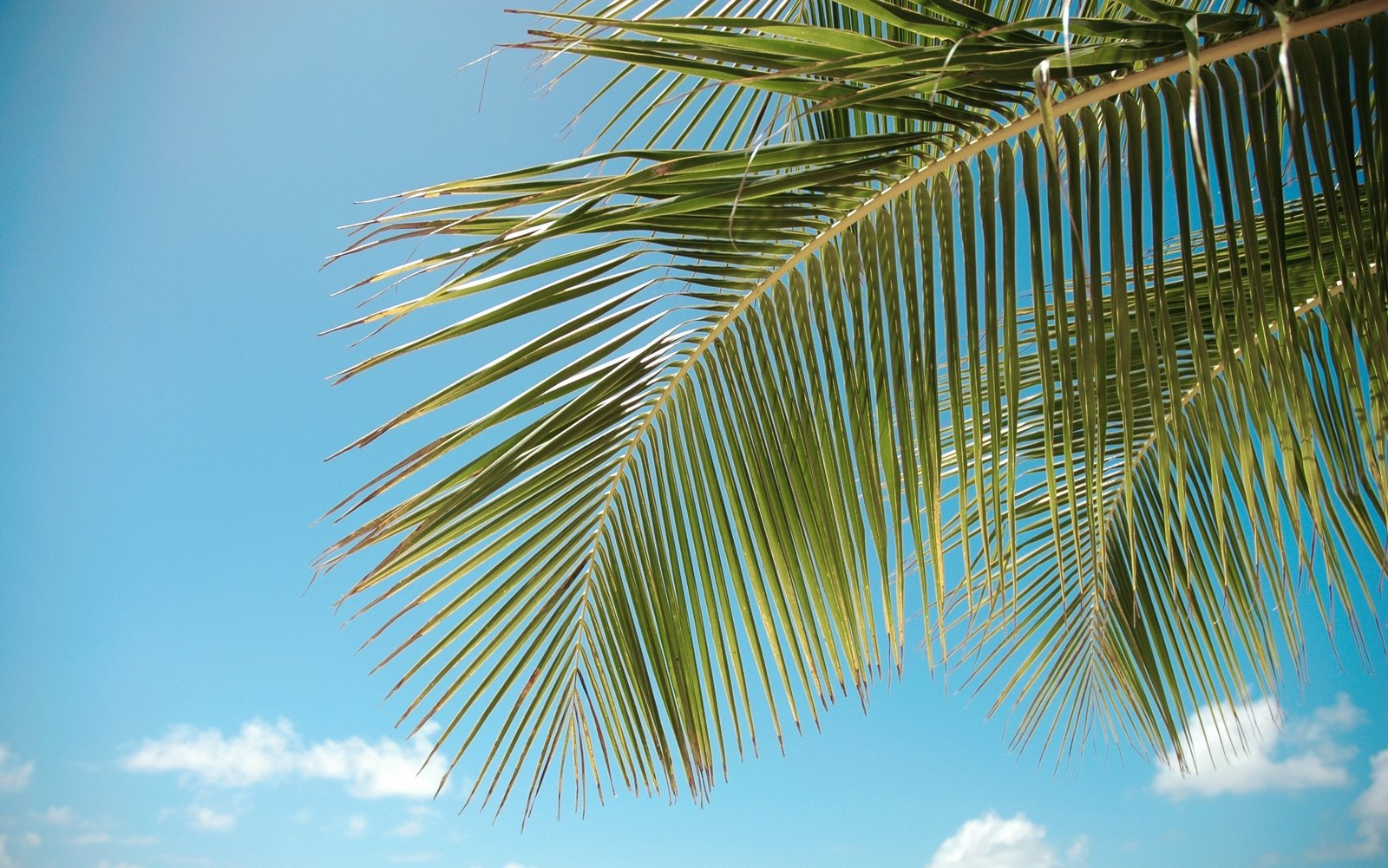 Palm HD Background