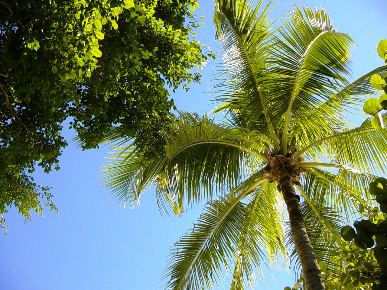 Palm Wallpaper For Laptop