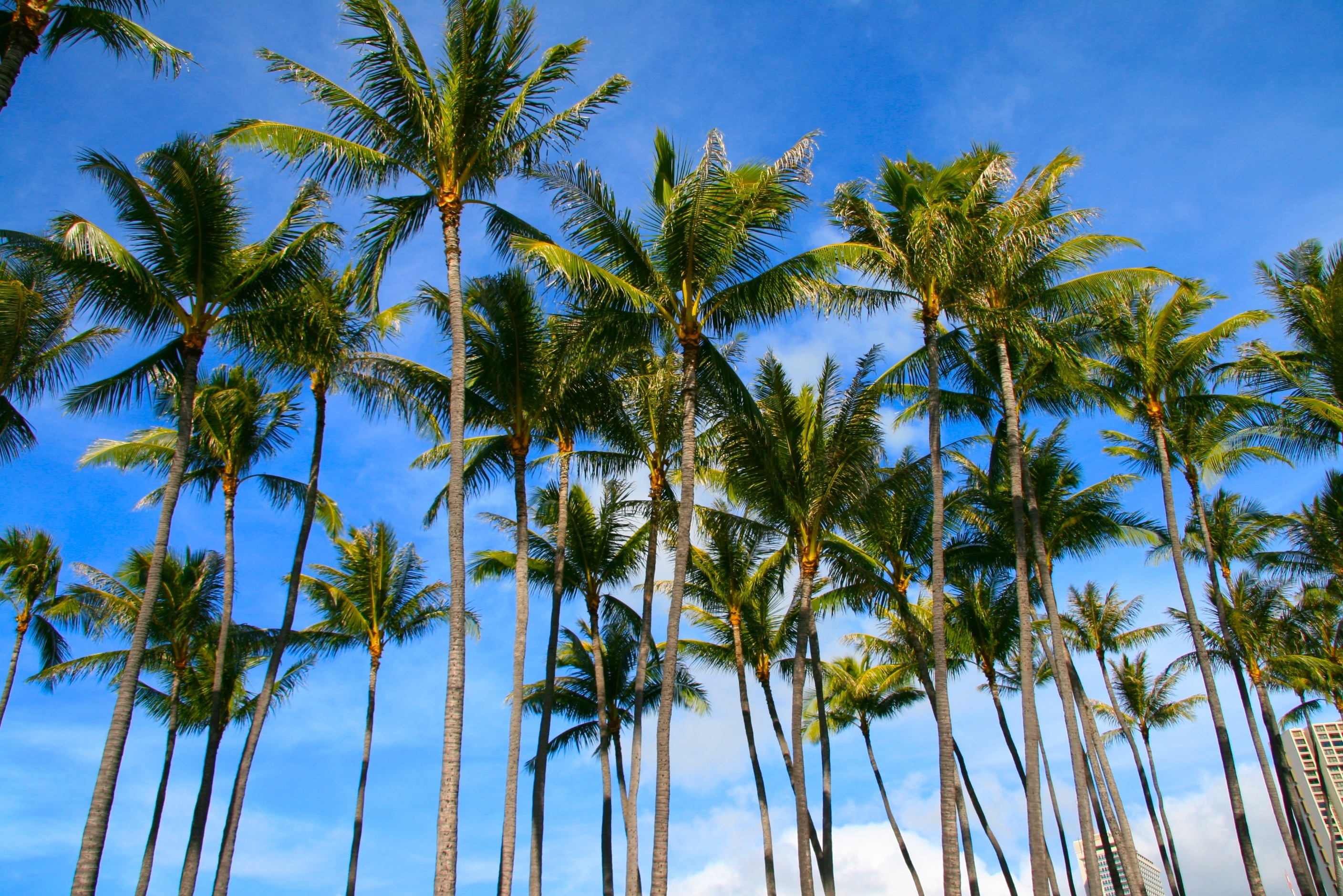 Palm Wallpapers HD