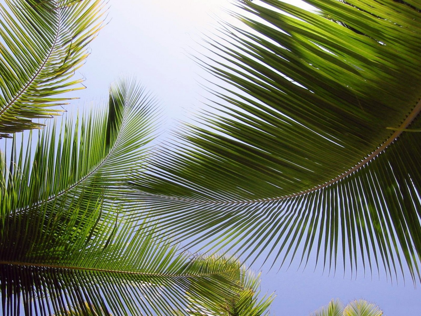 Palm Wallpapers HQ