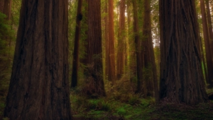 Redwood Images