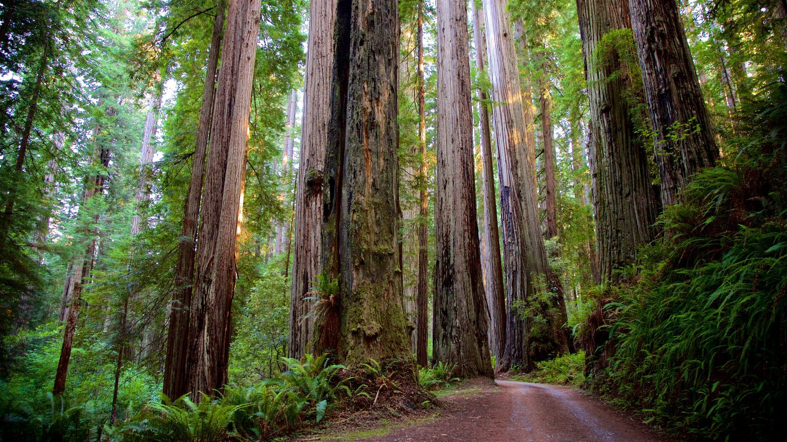 Redwood Wallpapers HD