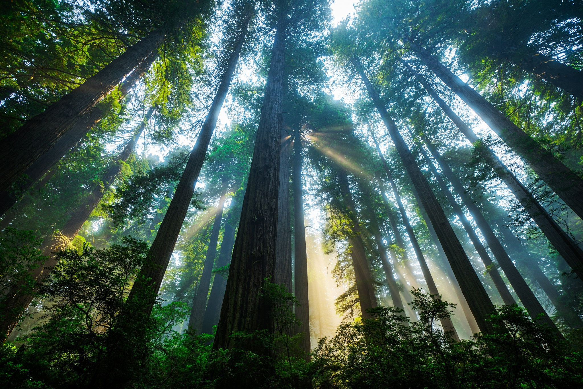 Redwood Wallpapers And Backgrounds