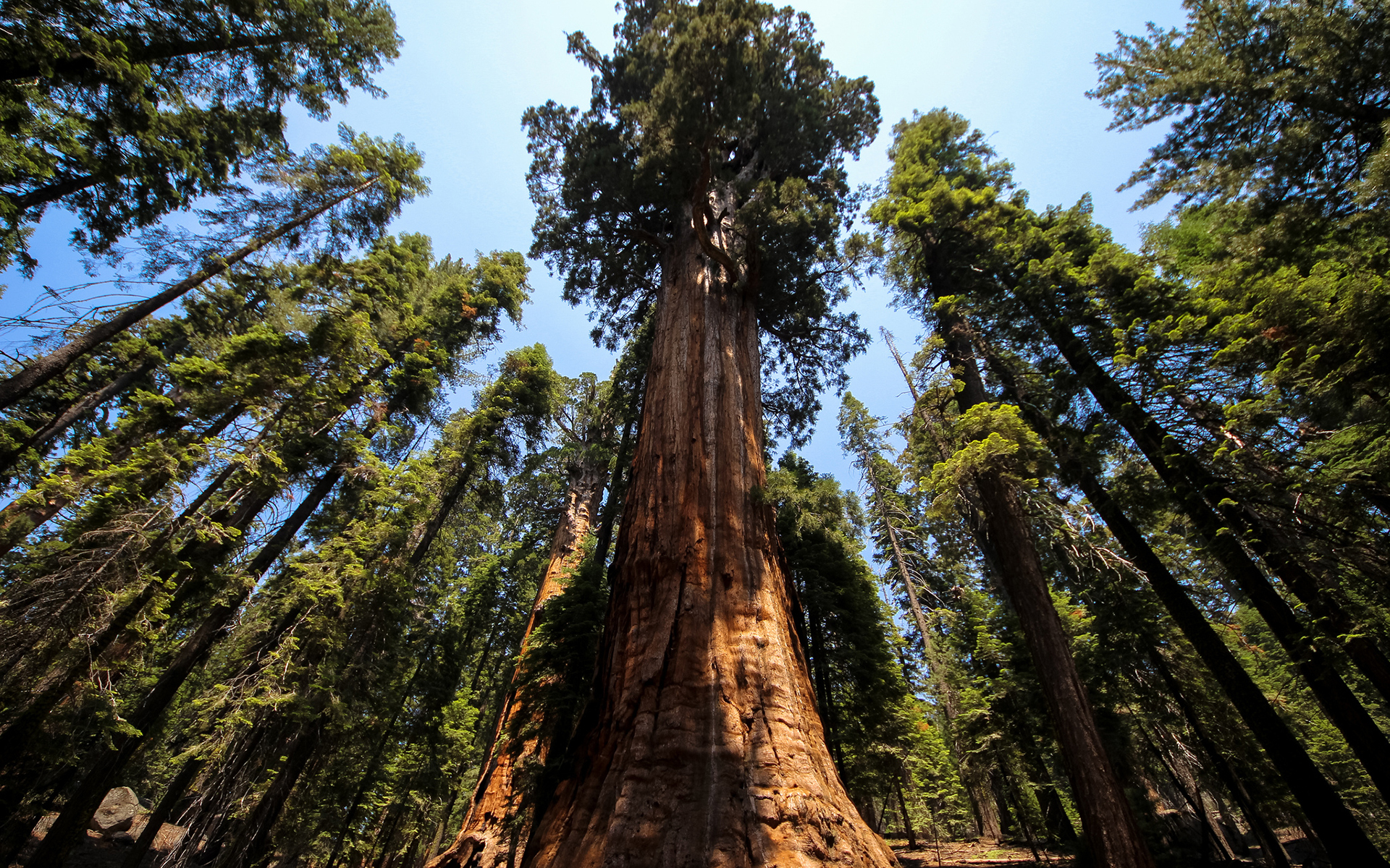 Redwood Full HD
