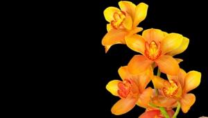Shenzhen Nongke Orchid Computer Wallpaper