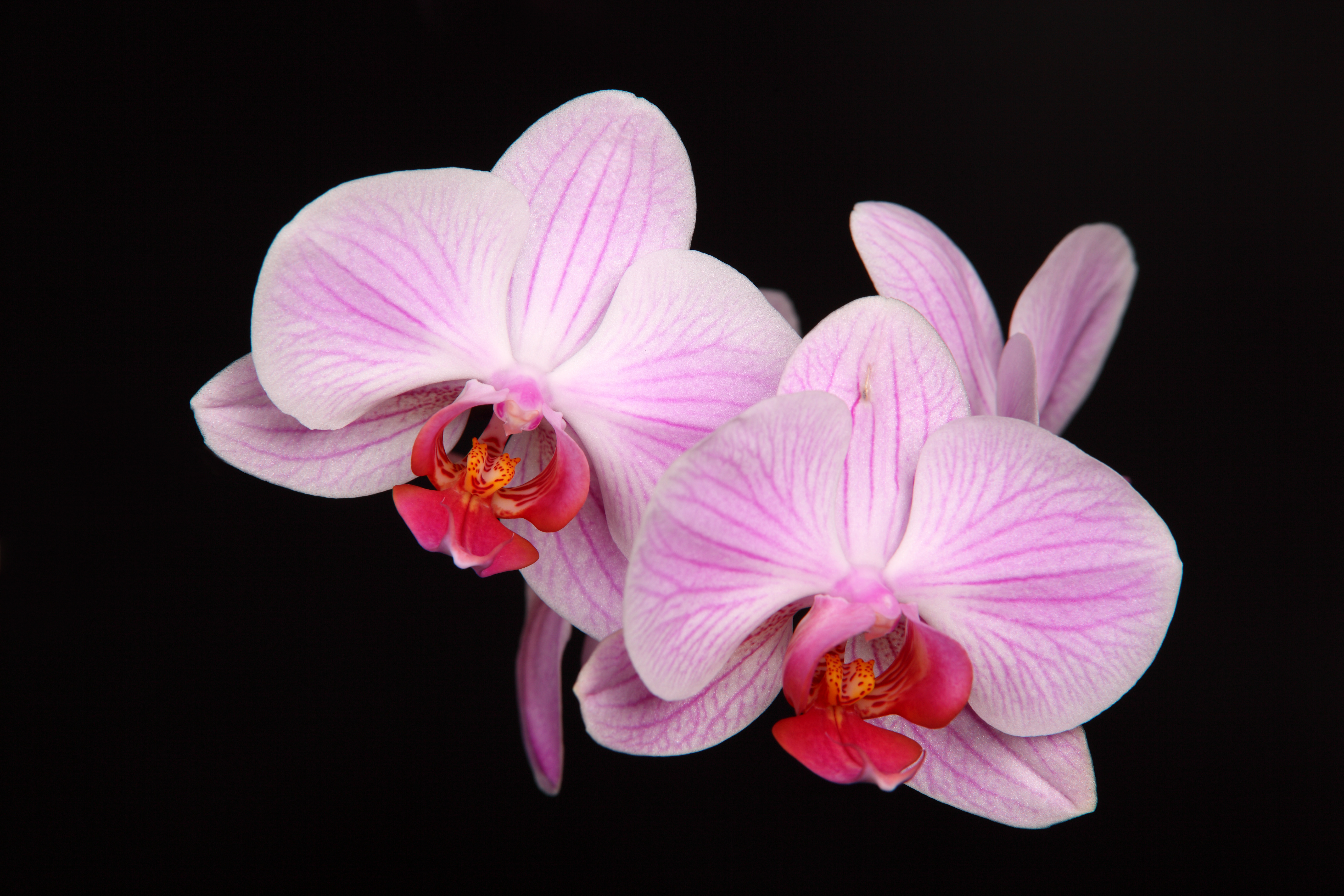 Shenzhen Nongke Orchid High Definition