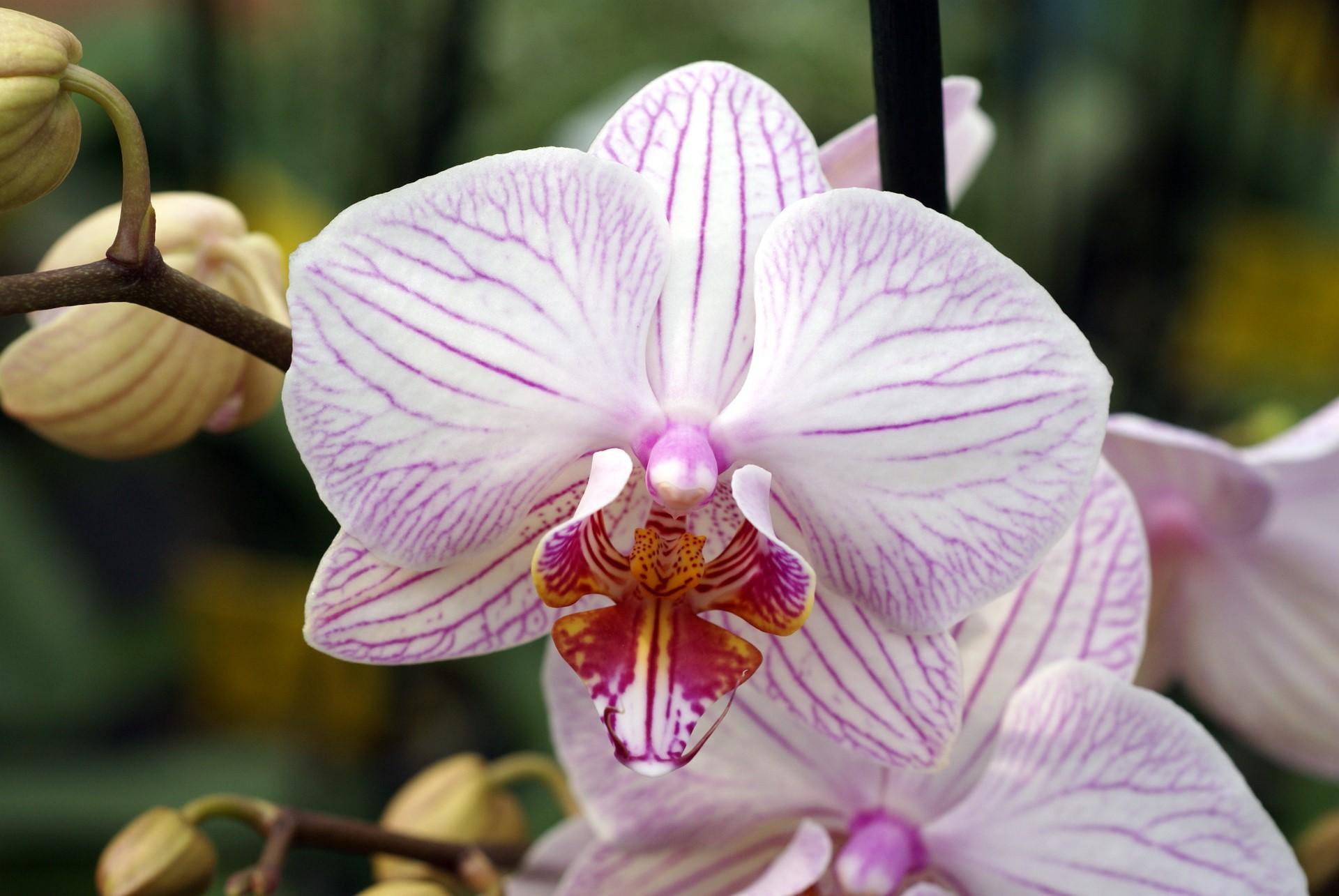 Shenzhen Nongke Orchid Pics