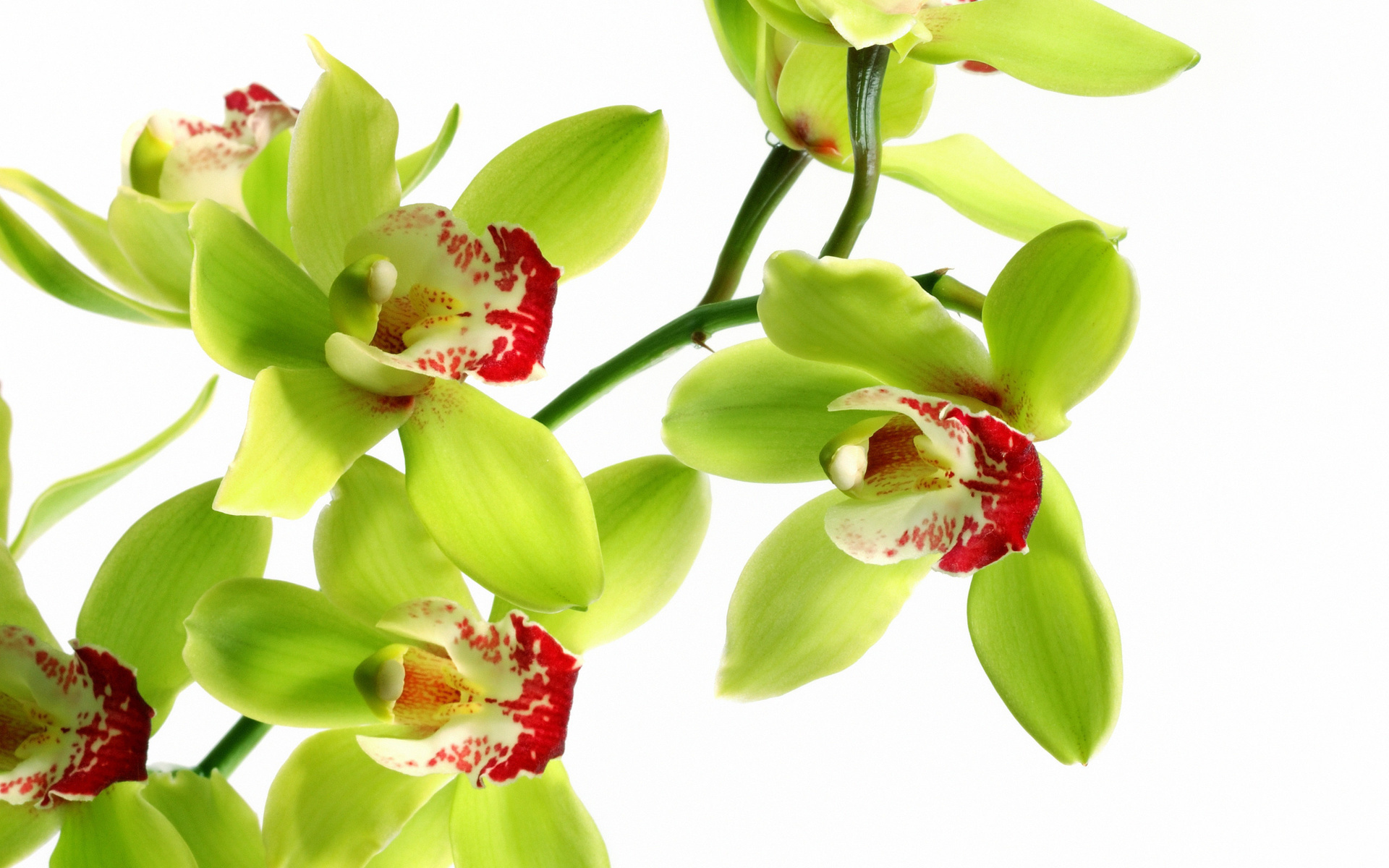 Shenzhen Nongke Orchid Wallpapers HD