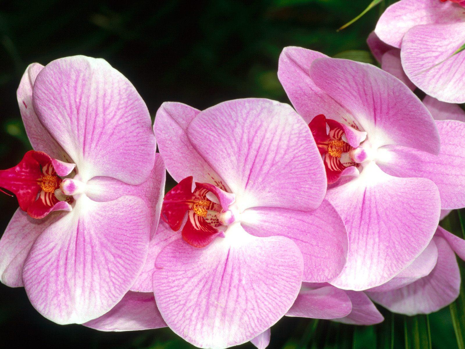 Shenzhen Nongke Orchid Widescreen
