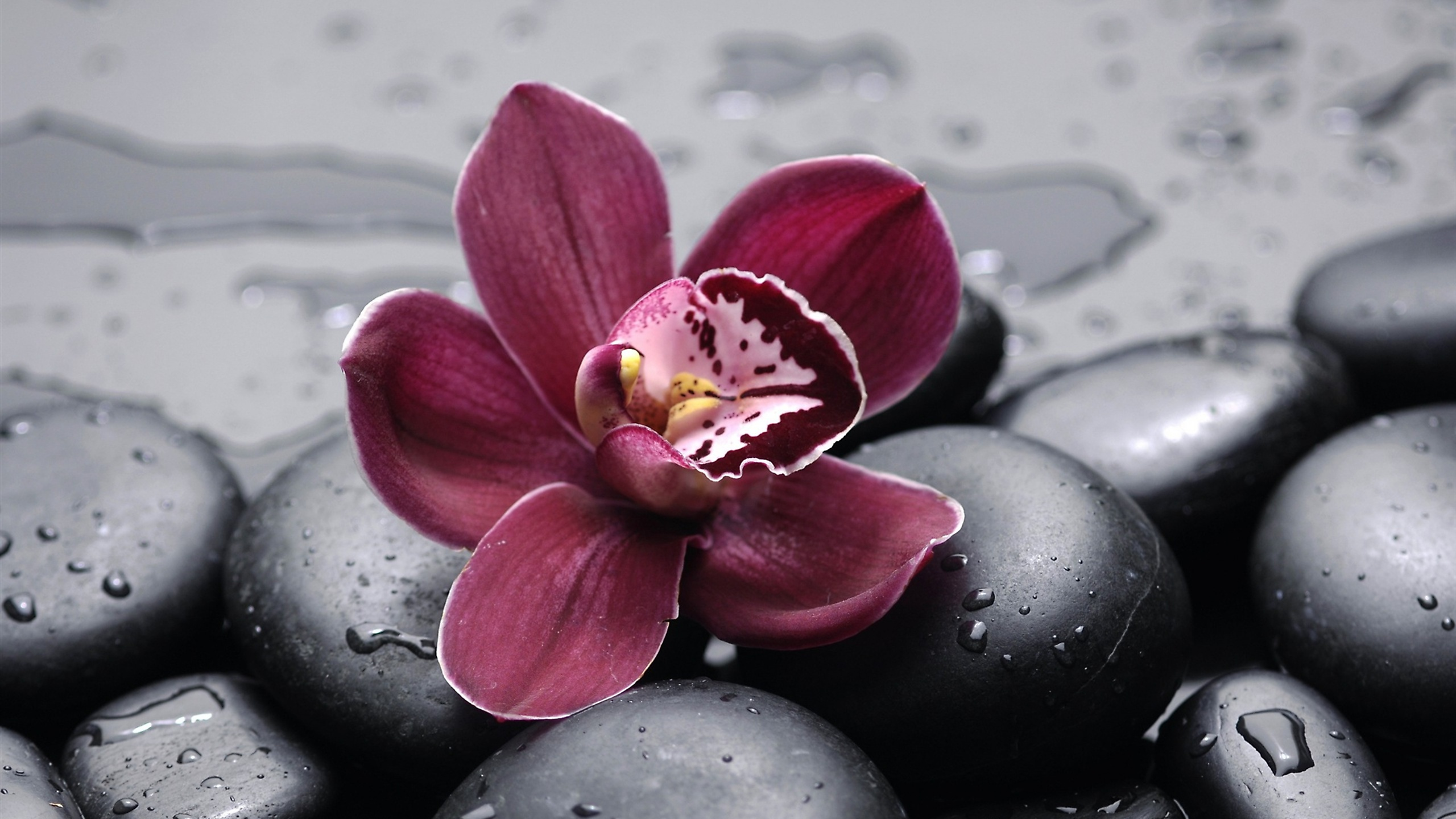 Shenzhen Nongke Orchid For Desktop
